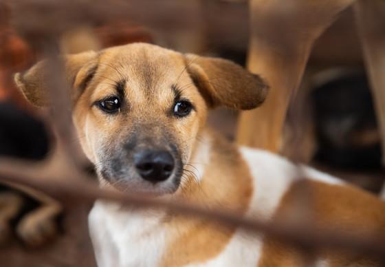 Hond Daisy
