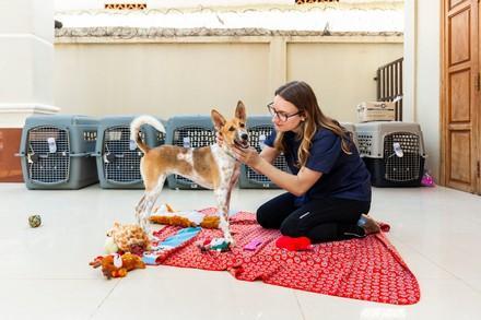 Un voyage À l'autre bout du monde pour Échapper au trafic de viande de chien