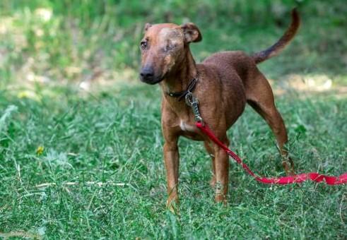 Dog Sira | куче Сира