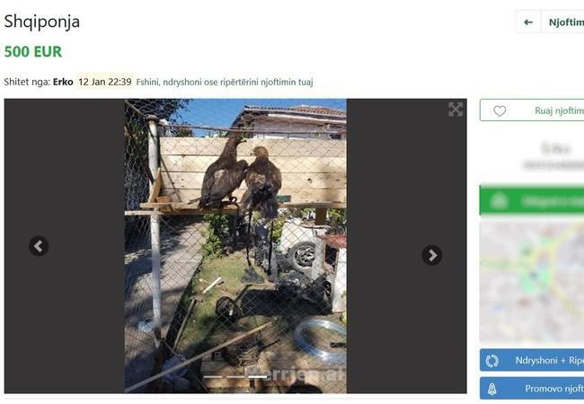 Sur merrjep.com il est possible de vendre des aigles