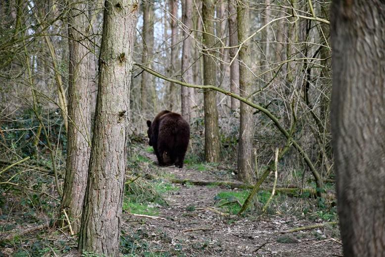 Tapsi durchforstet den Wald