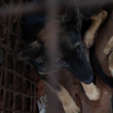 Des autres chiens sauvés