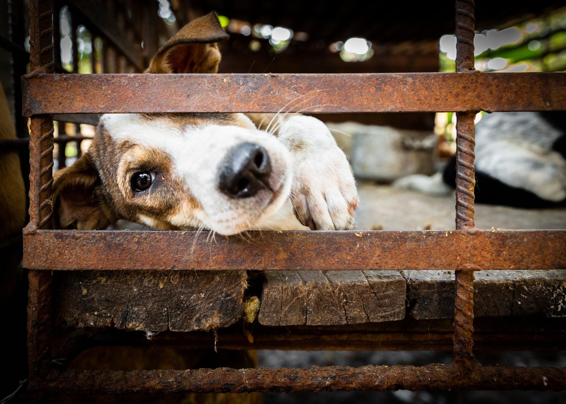 Hund hinter Gitter in Südostasien