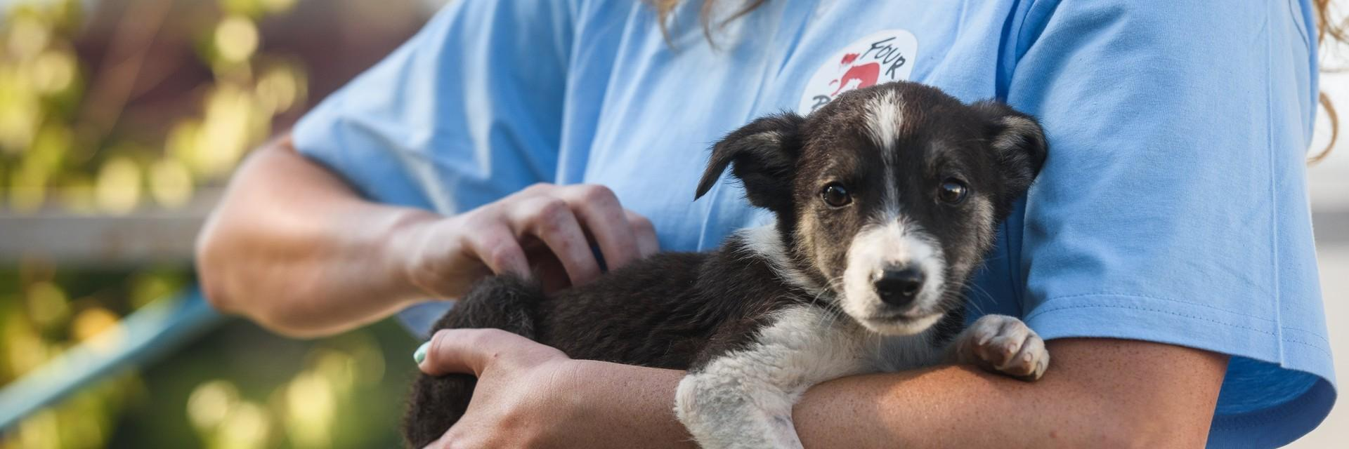 Stray puppy being held by rescuer