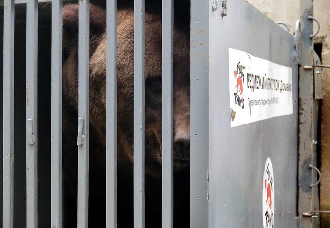 De redding van beer Martha
