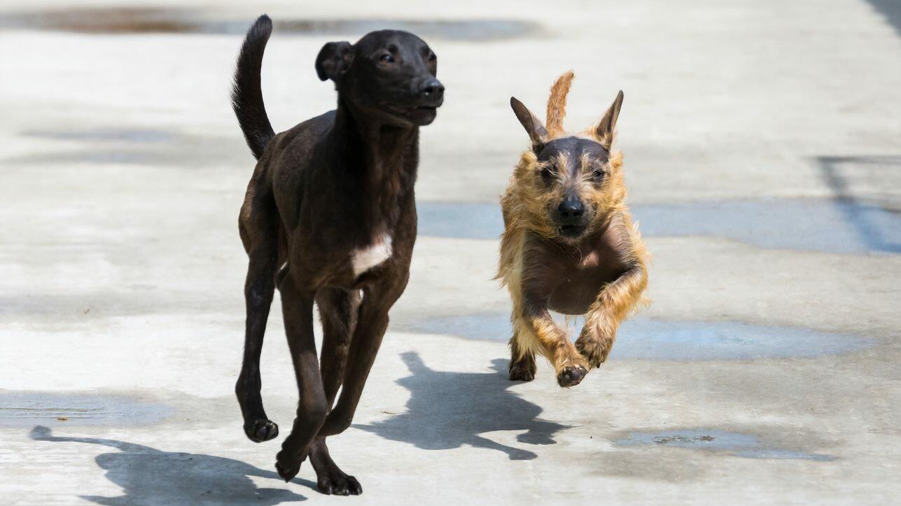 Две кучета