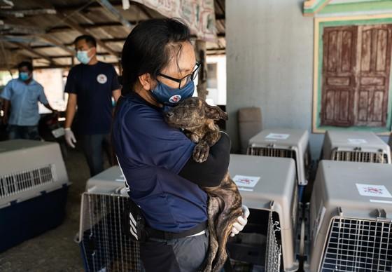 Un chien lors de son sauvetage