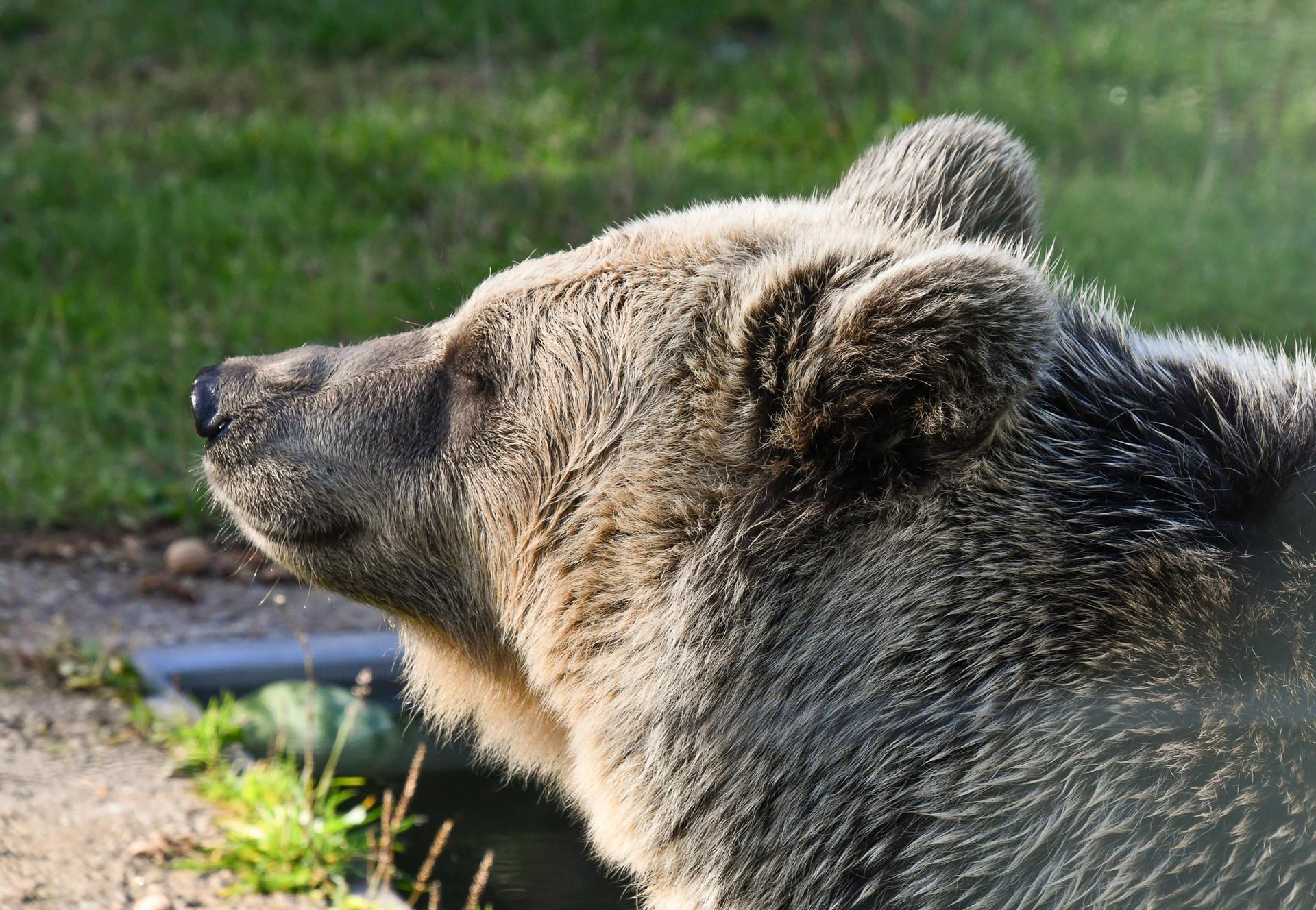 Dushi im Bärenglück
