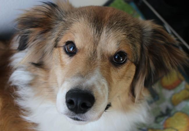 Hund Kucky