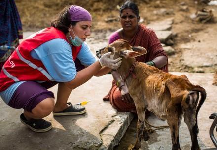 Aide aux animaux en cas de catastrophe