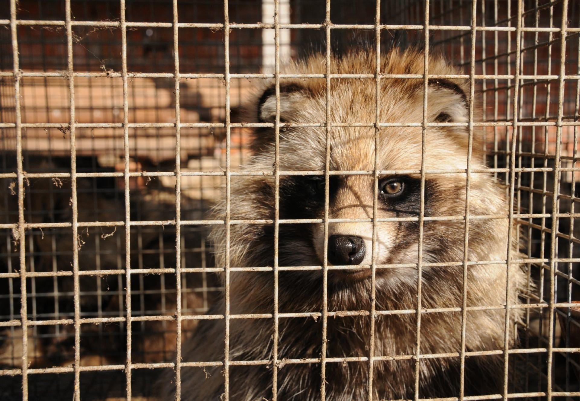 Tous les accessoires en fourrure, aussi petits soient-ils, sont synonymes de cruauté envers les animaux