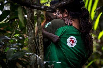 Mitarbeiterin hält ein Orang-Utan Baby