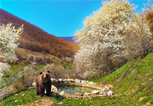Bear Vini at BEAR SANCTUARY Prishtina