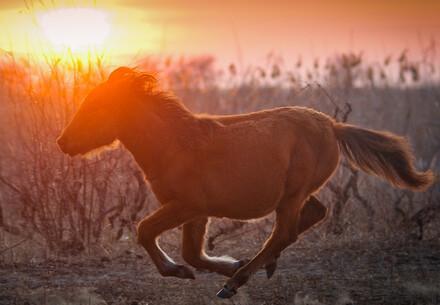 Wildpferd in Rumänien