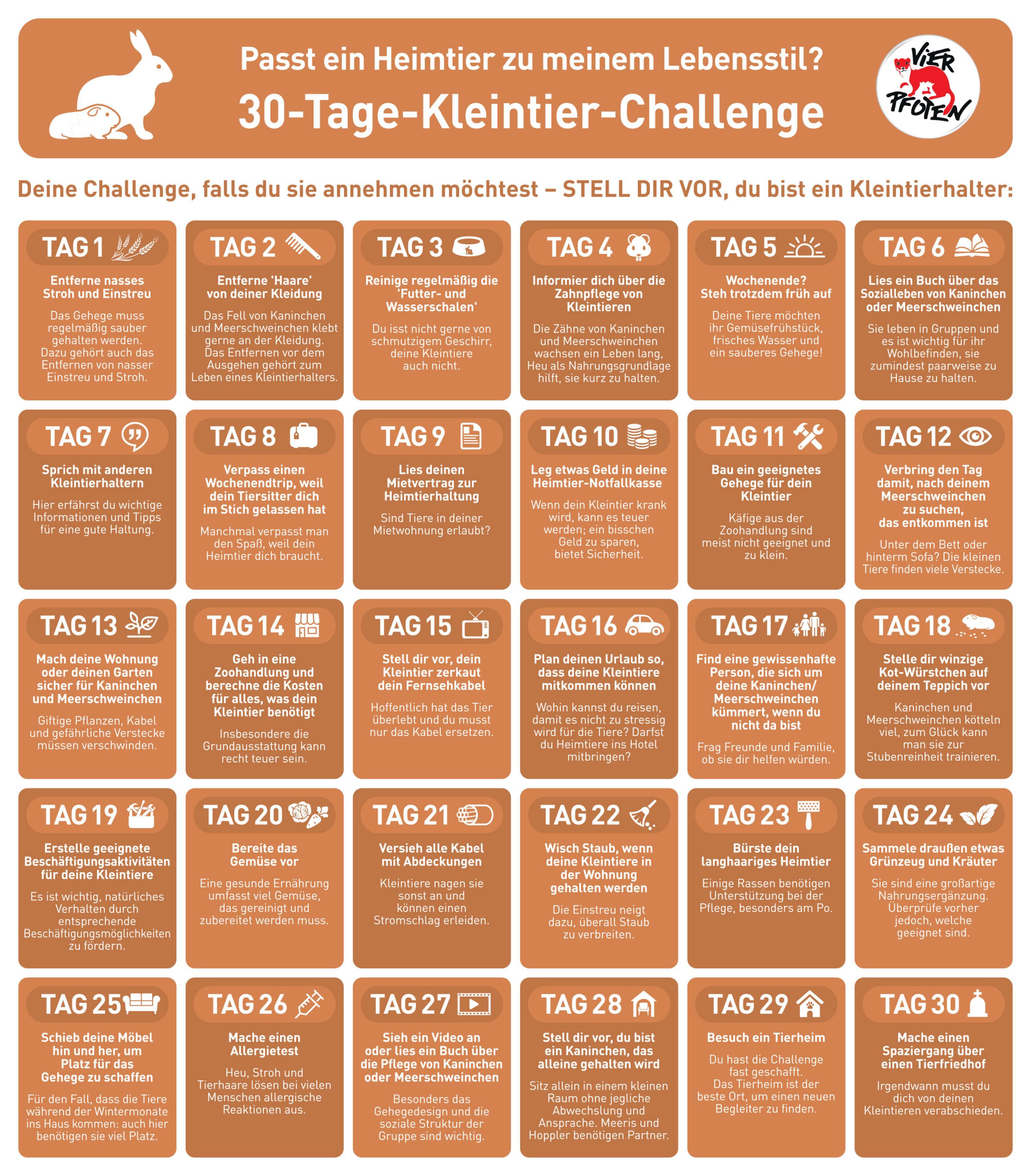 VIER PFOTEN 30-Tage-Challenge für Kleintiere