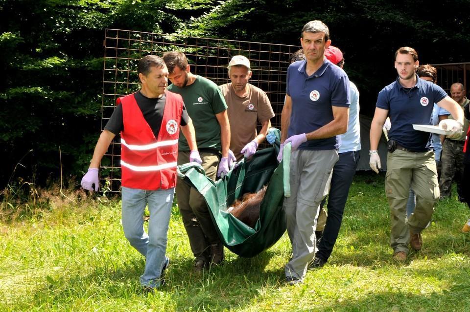 FOUR PAWS saves fighting bear Kvitka