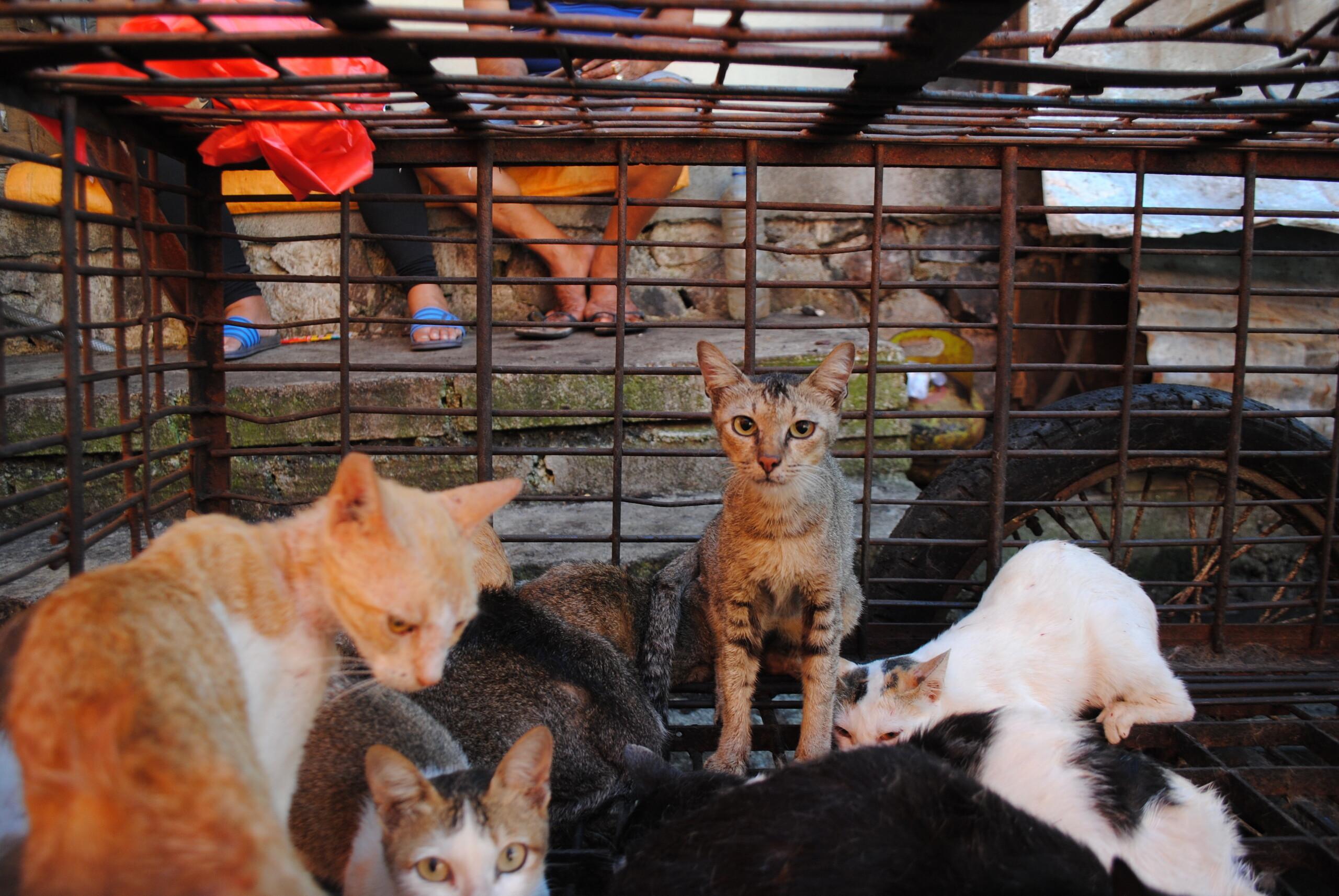 Des chats destinés à l'abattoir