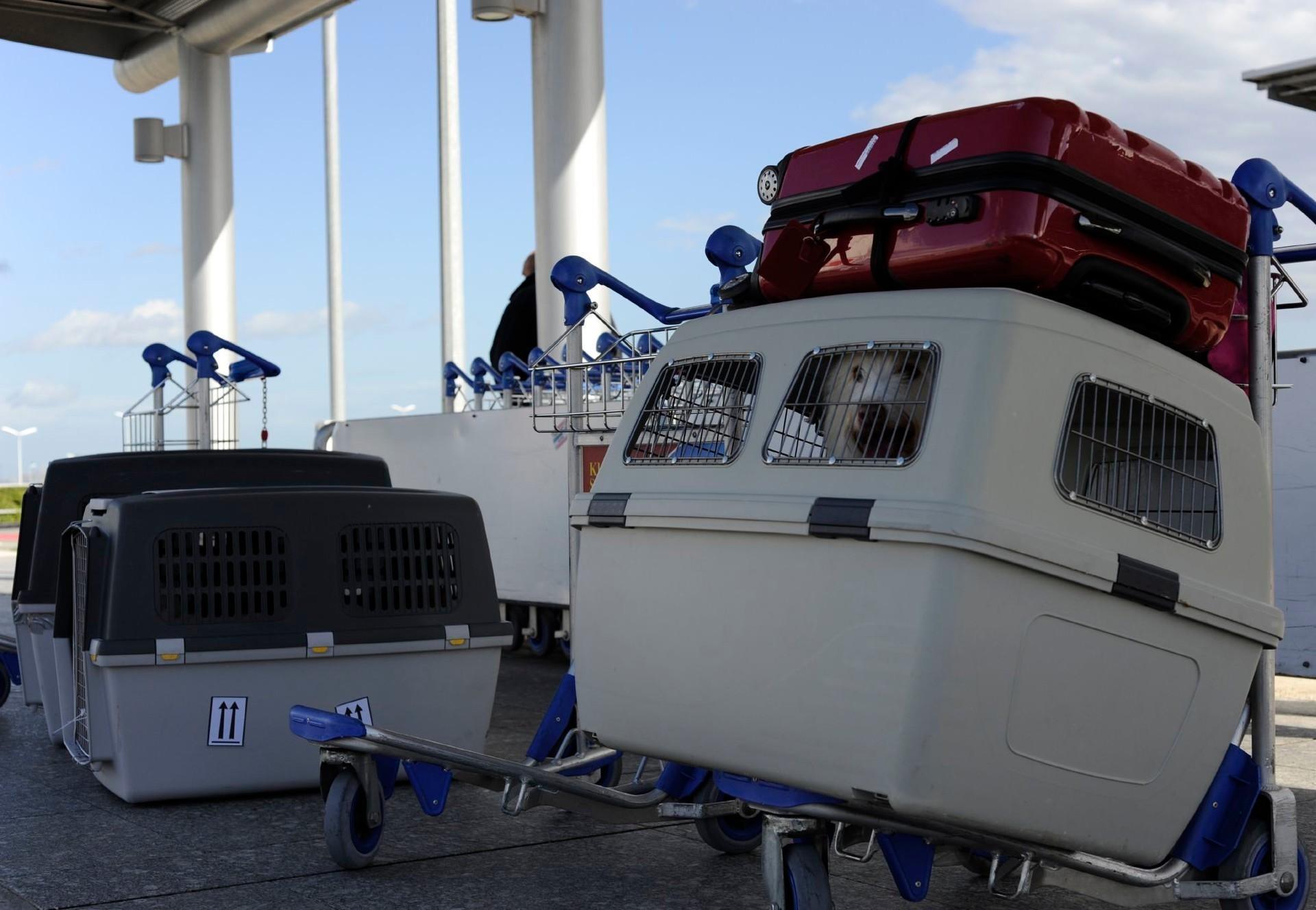 Transportbos mit Hund