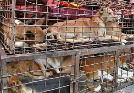Dierenmarkten - Honden in kooien