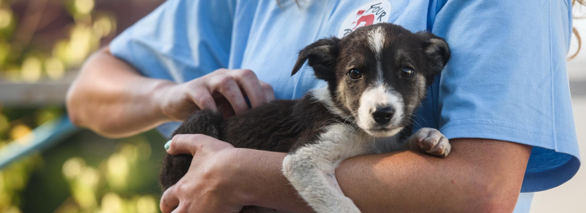 VIER PFOTEN hilft Tieren in Not