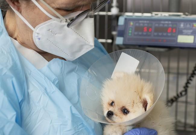 Tierspital Zürich