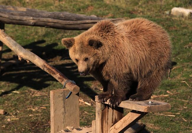 Bear cub Andri