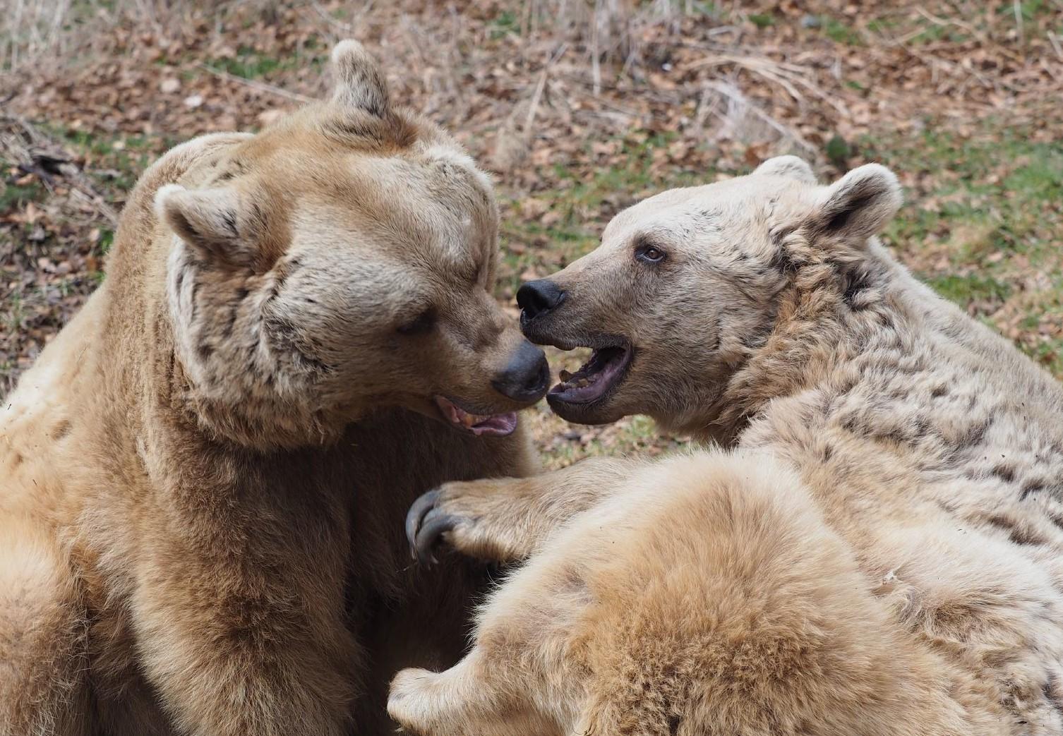 Livre sur les ours