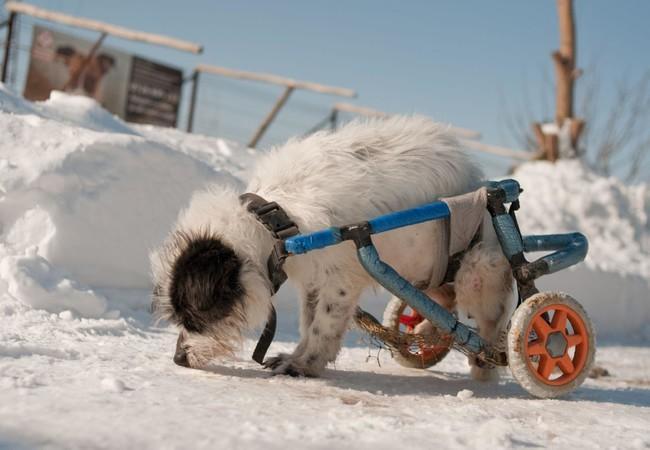 Hond in Speranta