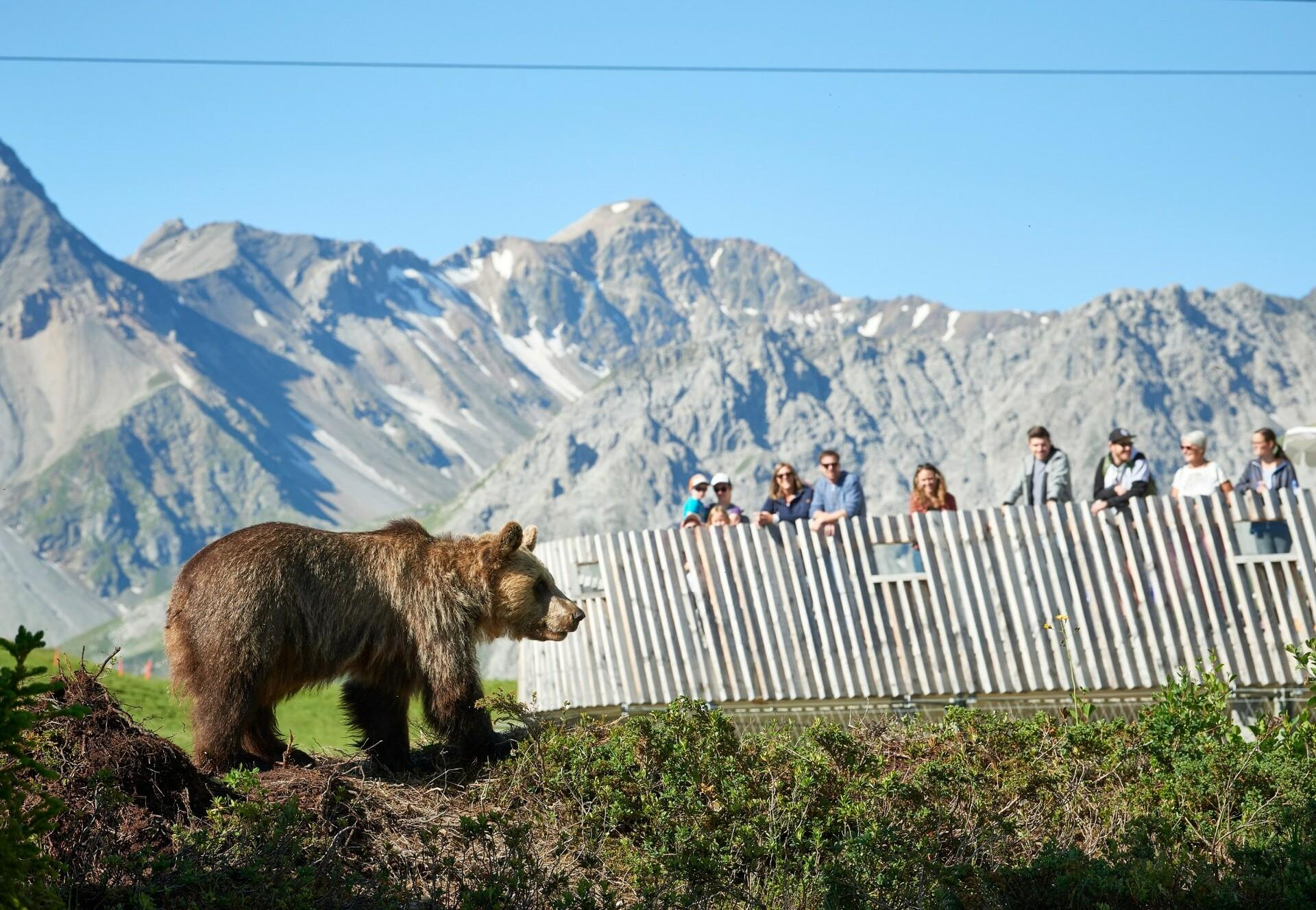 Bear Amelia in the Arosa Bear Sanctuary