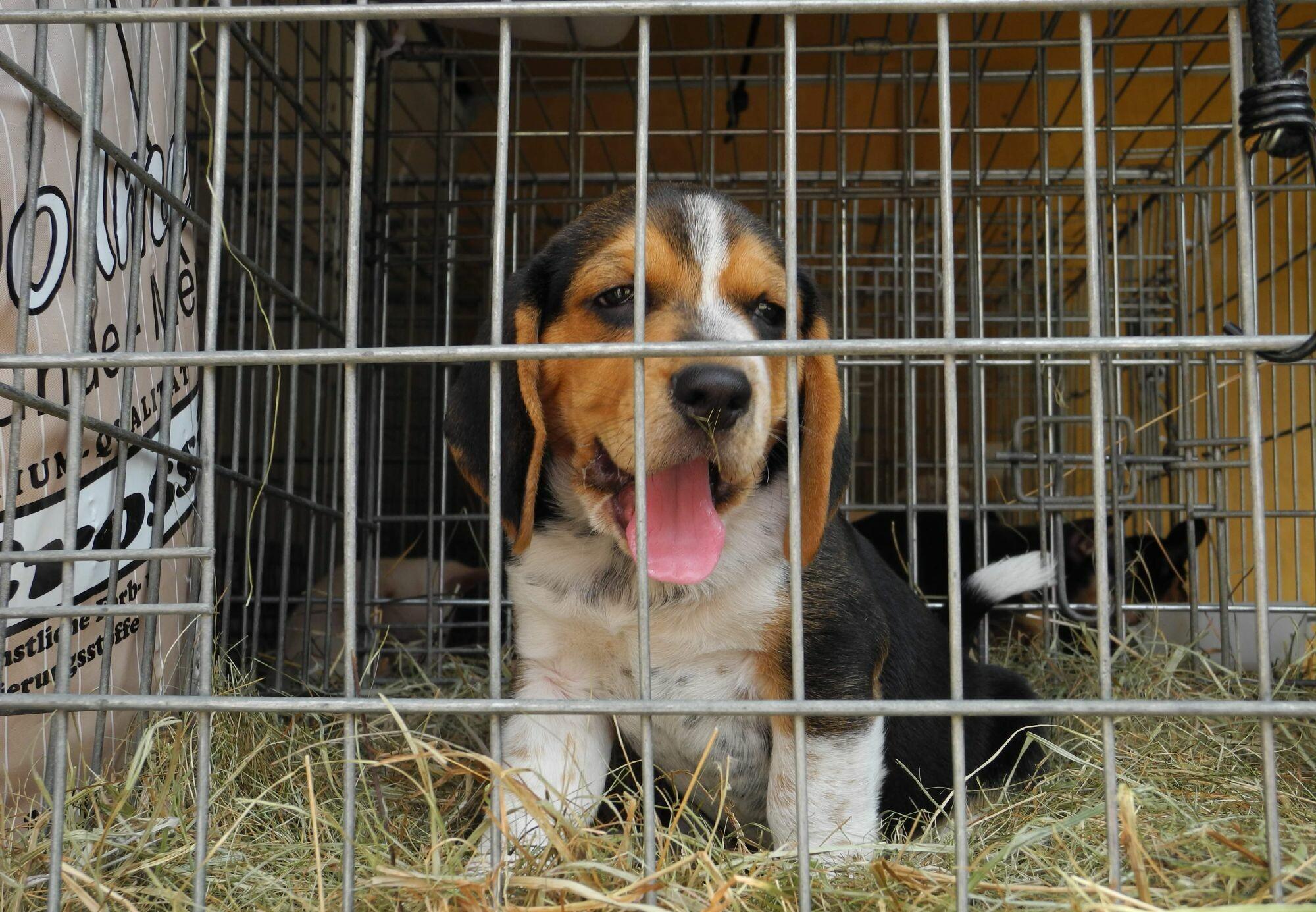 puppy trade