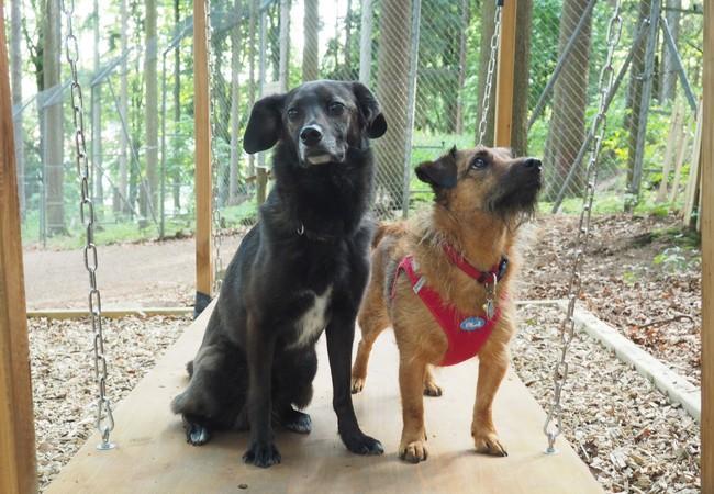 Zwei Hunde auf einem Balancierbrett.