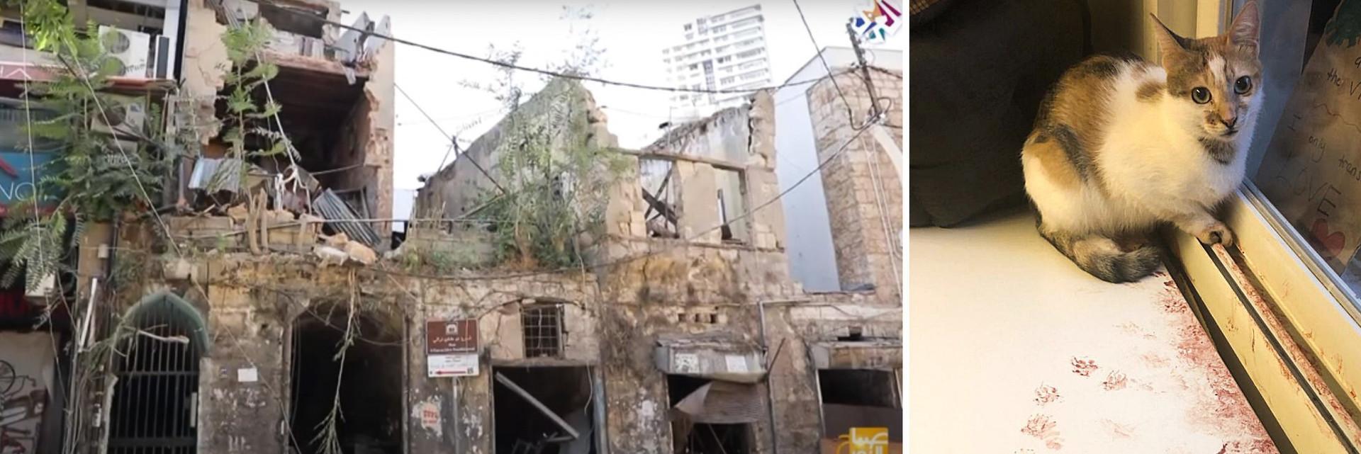 Catastrophe au Liban