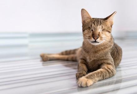 Blinde kat Mina