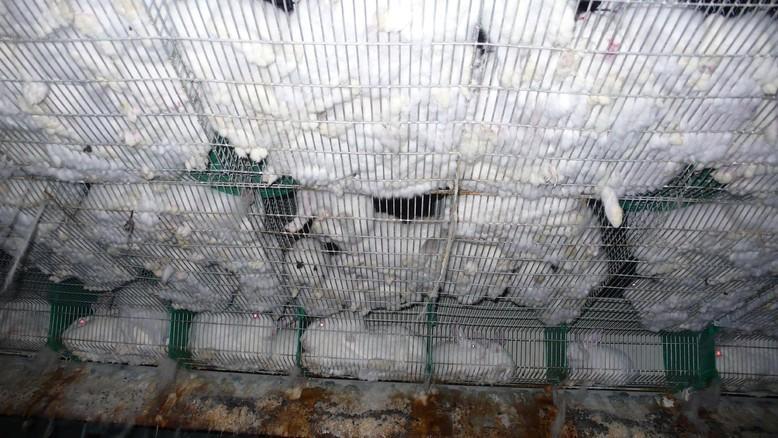 Animal Charity - Rabbit Farm