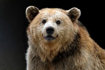 glücklicher Bär