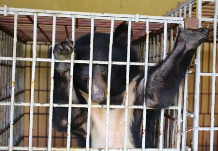 Asiatischer Schwarzbär Cam