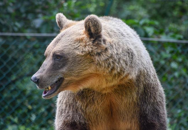 Bären aus der Nähe beobachten
