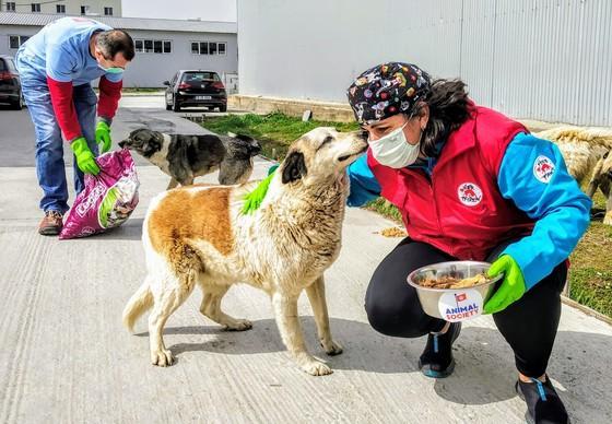 Stray animal care in Romania