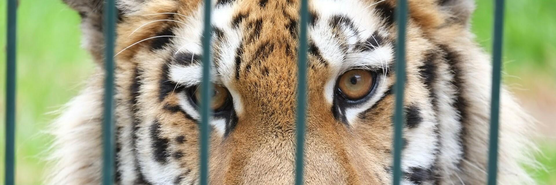 Help for big cats