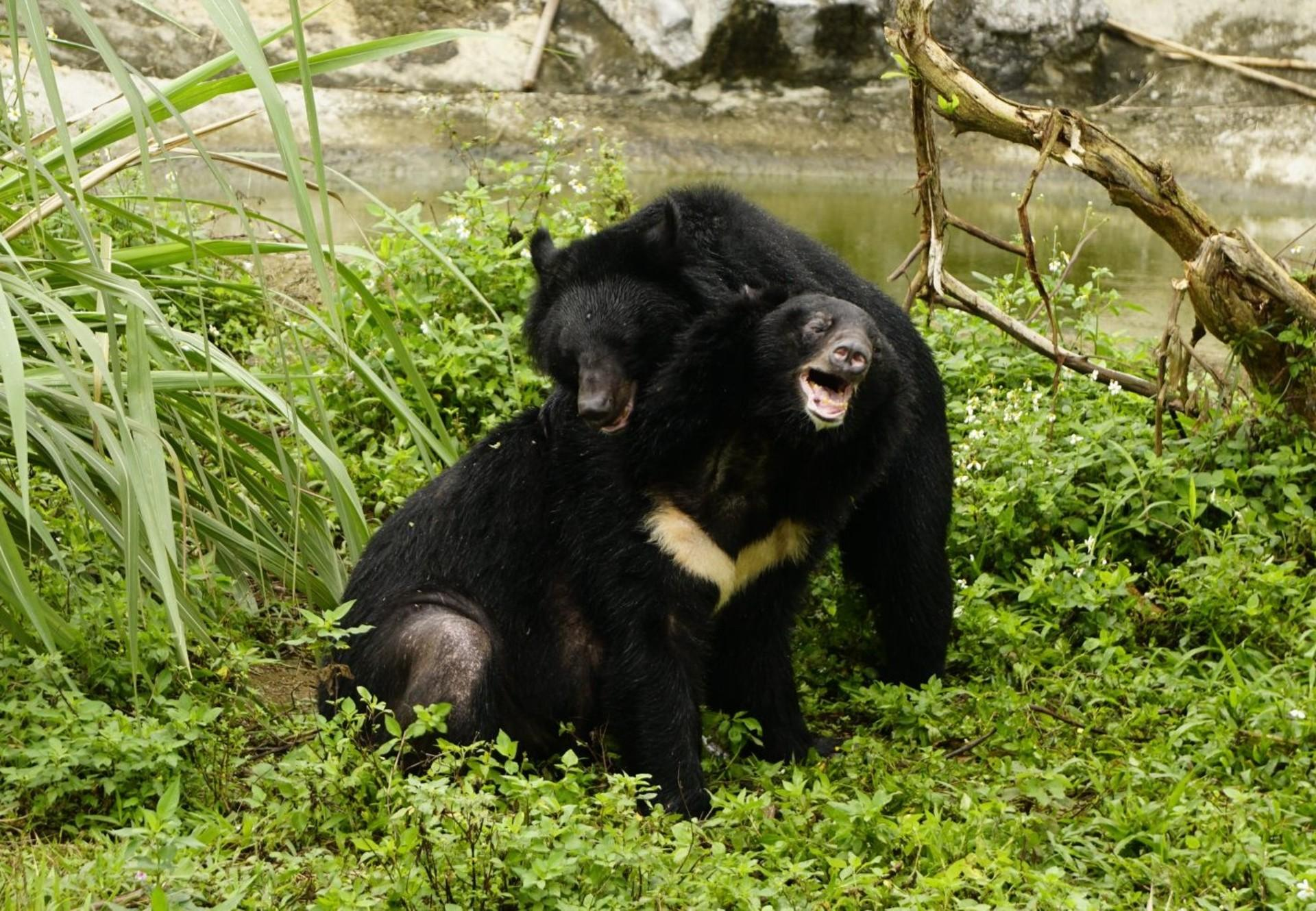 Bears James and Freddie playing
