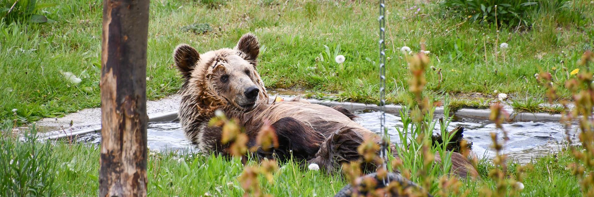 Bärenvideos entdecken