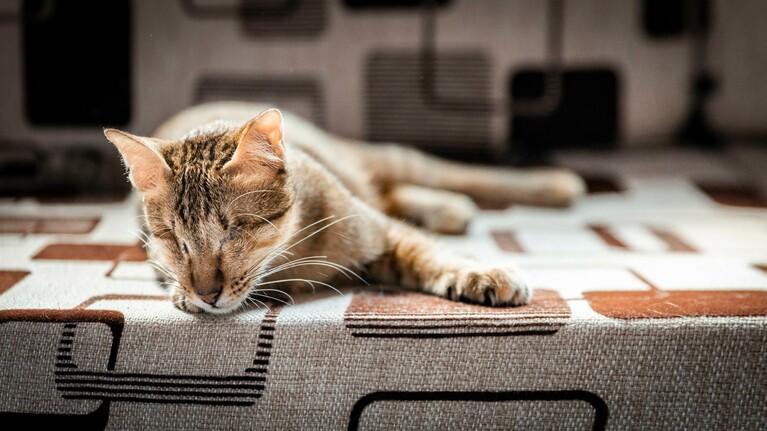 Koop een borstel voor een geredde kat