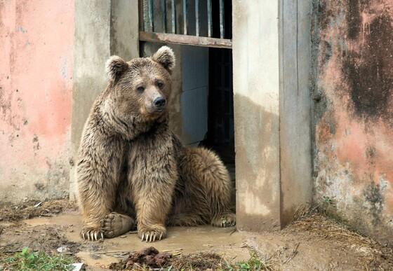 Bear Bubloo