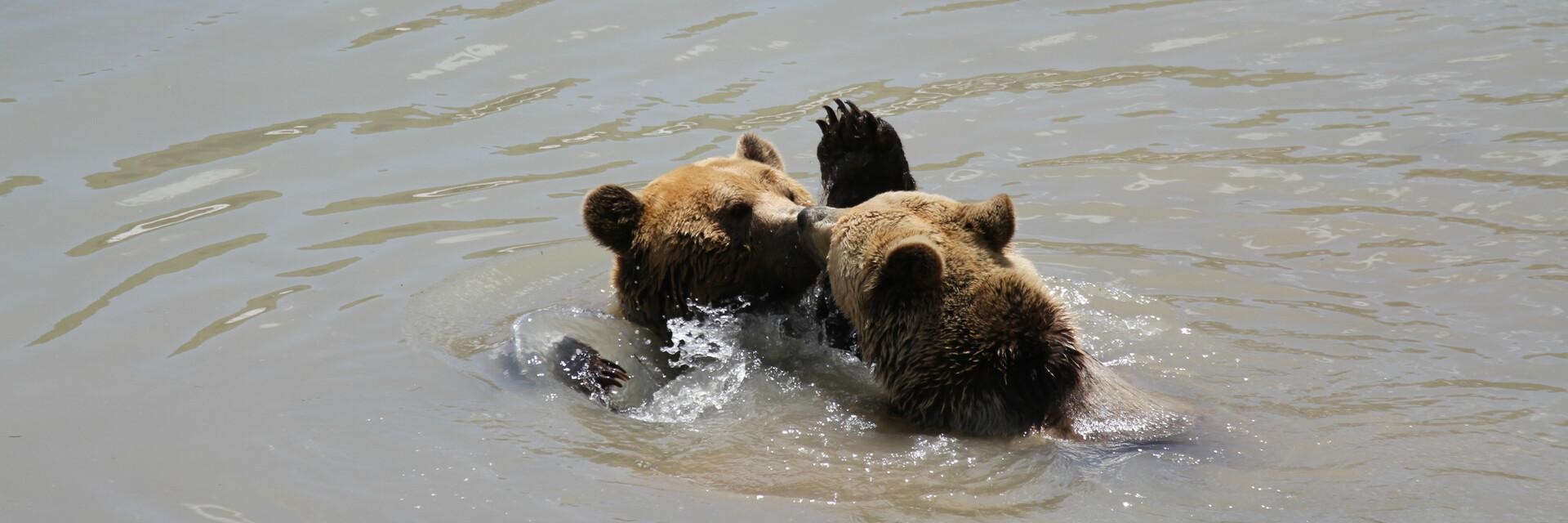 Amelia und Meimo im Arosa Bärenland