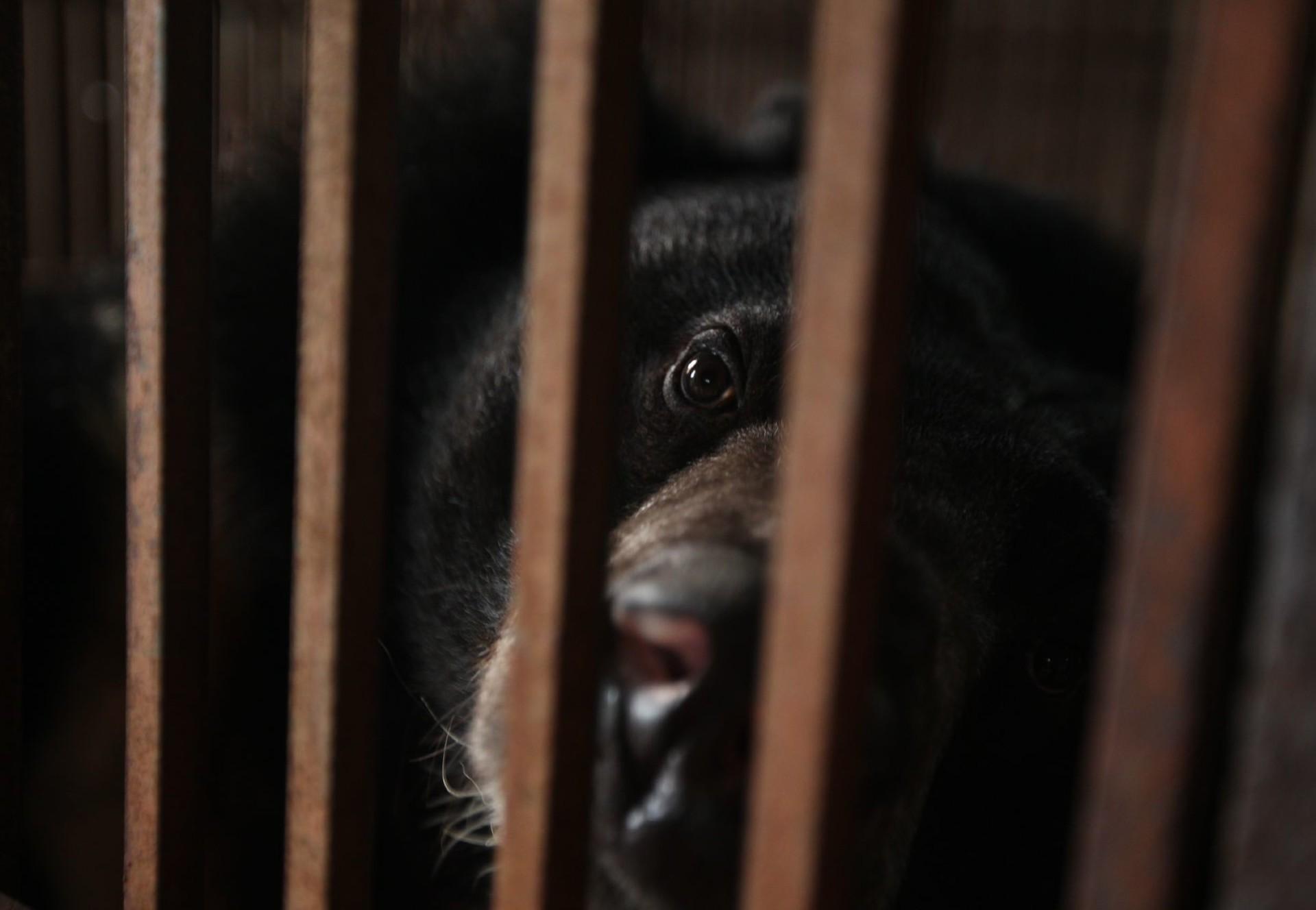 Stop de galbeerindustrie in Vietnam