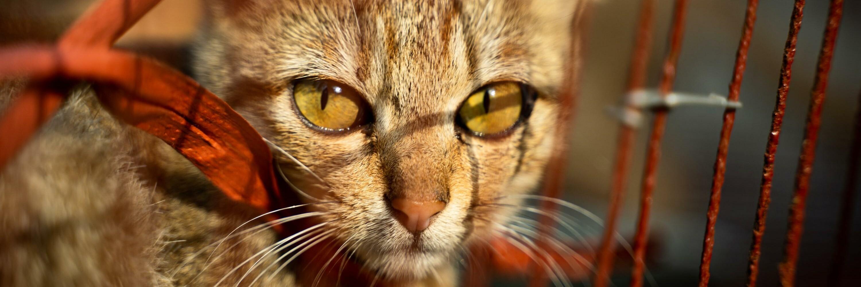 Cat slaughterhouse closure in Vietnam