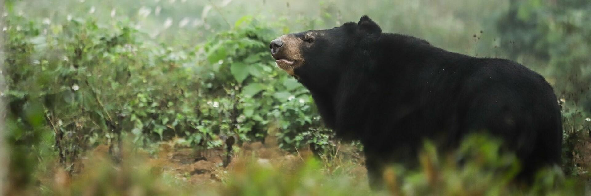 Bear at BEAR SANCTUARY Ninh Binh