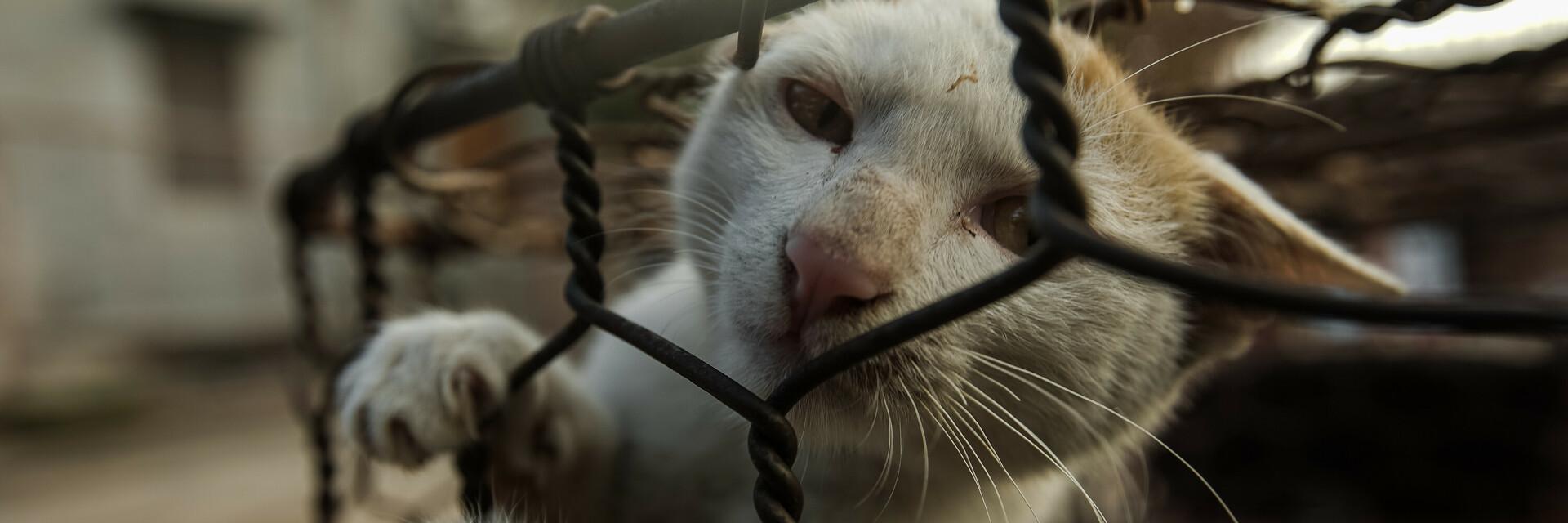 Kat in kooi voor slacht