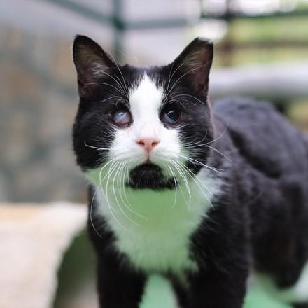 коте Лео (cat Leo)