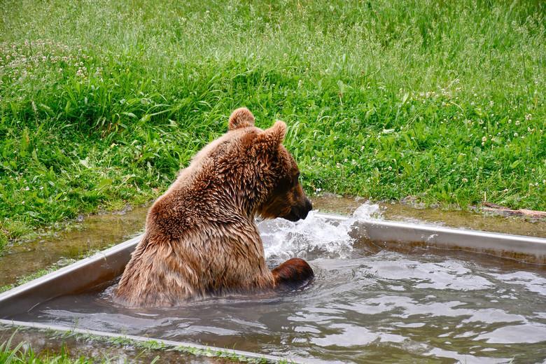 Erstes Mal baden für Rocco